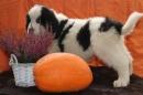 Zdjęcie 10 - Zakątek BERNA - hodowla Berneńskiego Psa Pasterskiego i Landseera