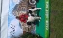 Zdjęcie 23 - Zakątek BERNA - hodowla Berneńskiego Psa Pasterskiego i Landseera