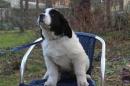 Zdjęcie 24 - Zakątek BERNA - hodowla Berneńskiego Psa Pasterskiego i Landseera