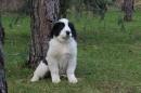 Zdjęcie 22 - Zakątek BERNA - hodowla Berneńskiego Psa Pasterskiego i Landseera