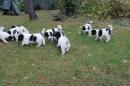 Zdjęcie 4 - Zakątek BERNA - hodowla Berneńskiego Psa Pasterskiego i Landseera